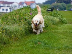 why-dogs-eat-grass