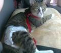 Cat Diapers