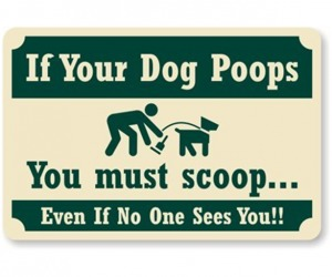 If Your Dog Poops You must scoop
