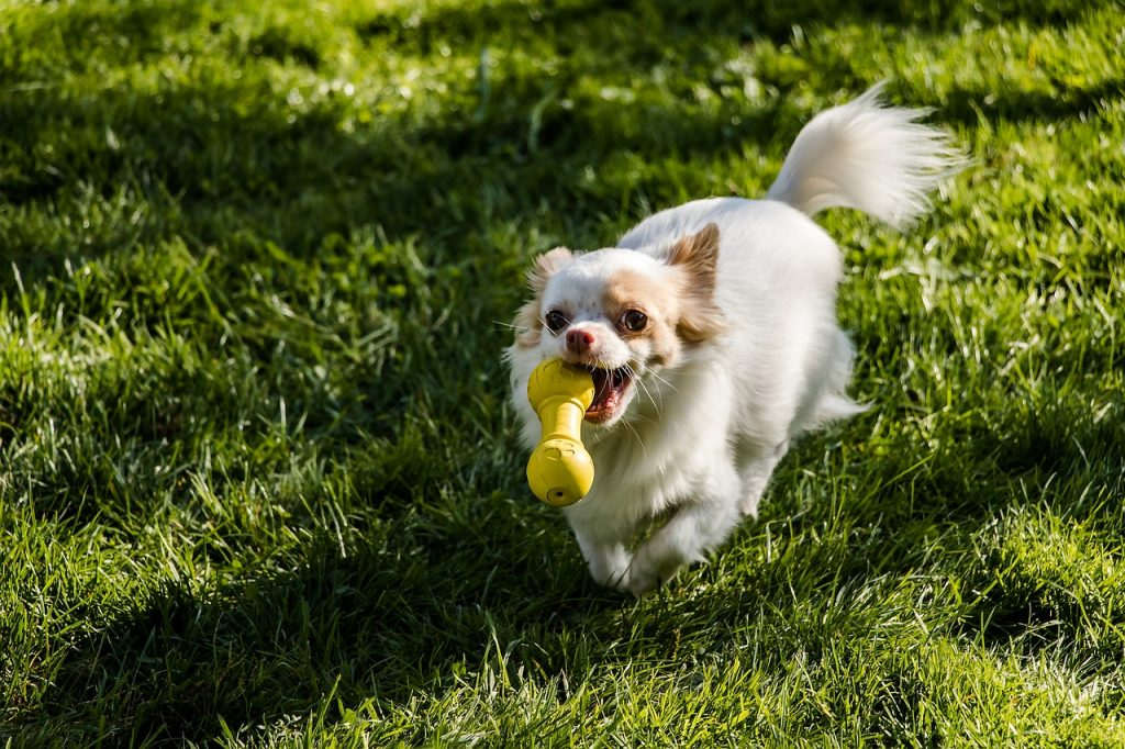 A Dog Brings You His Toys