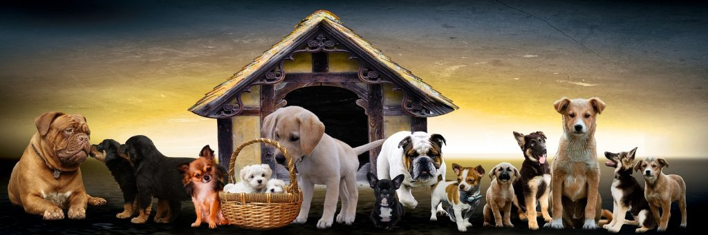 All dog breeds A-Z with pictures