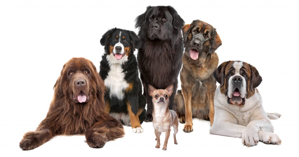 All dog breeds in the world