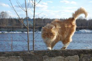 Cats fur looks scruffy...