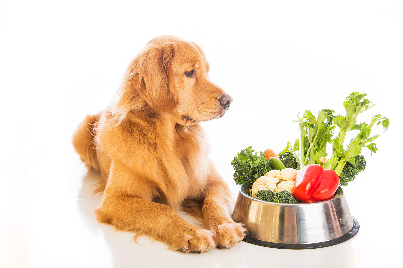 Can a dog be vegetarian
