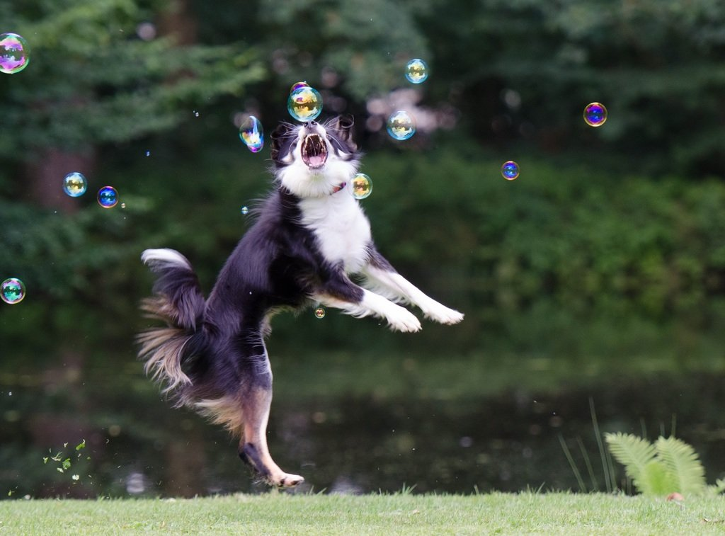 Chasing bubbles game for dog