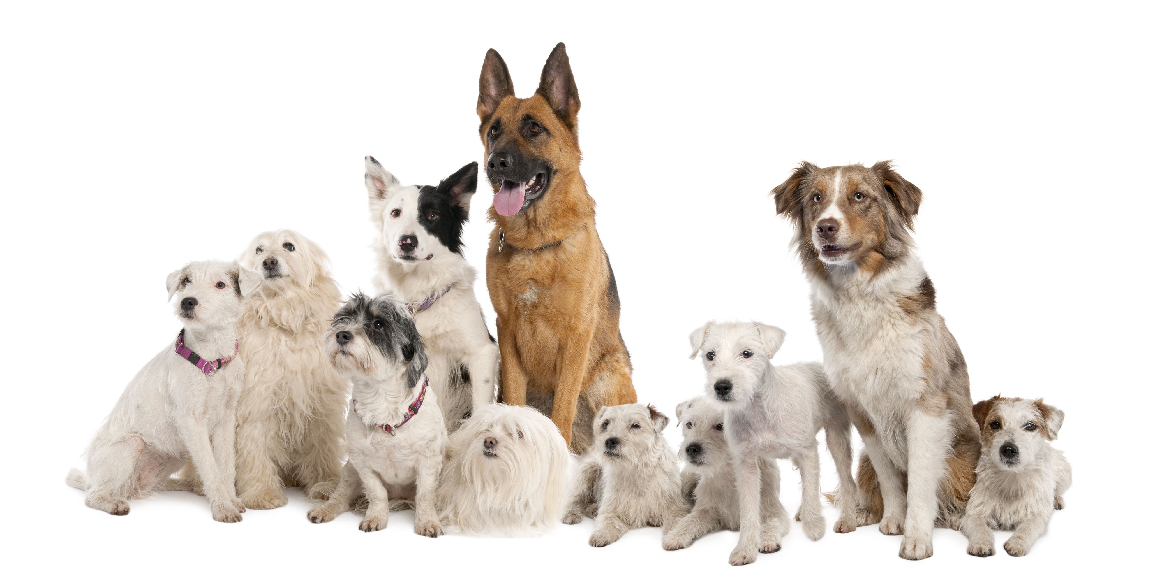 Choose dog food depending on your pet characteristics