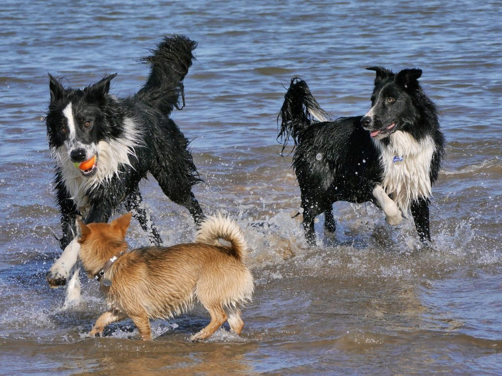 Fetch In Water game for dogs