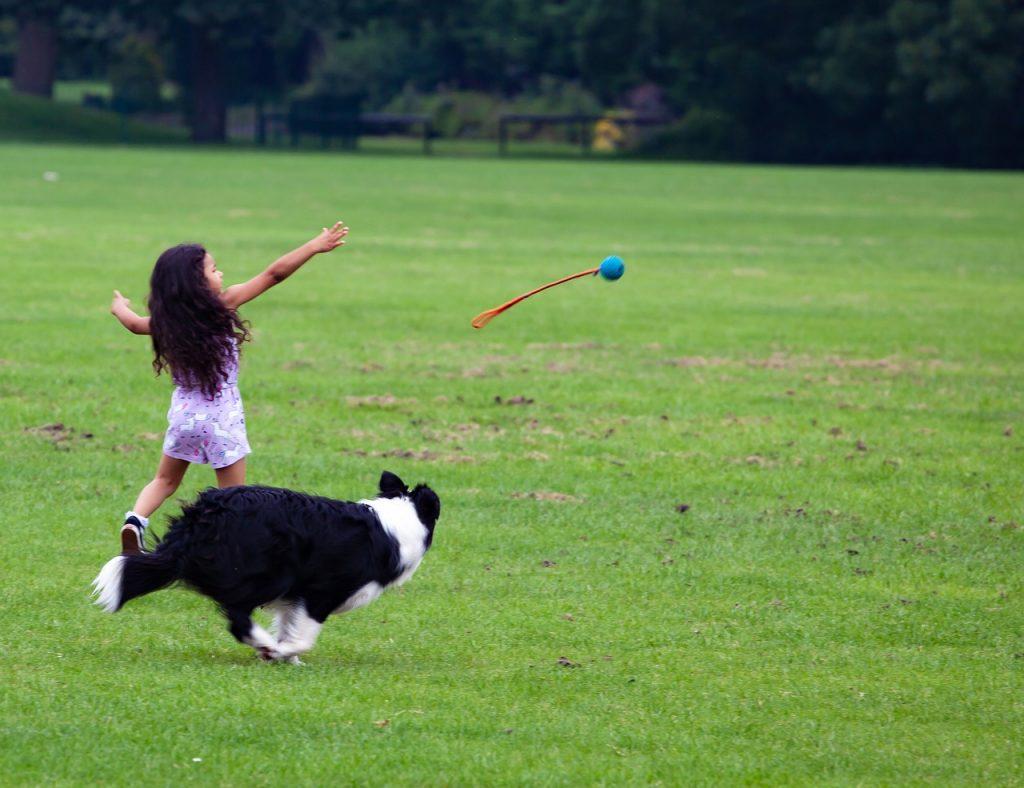 Fetch game