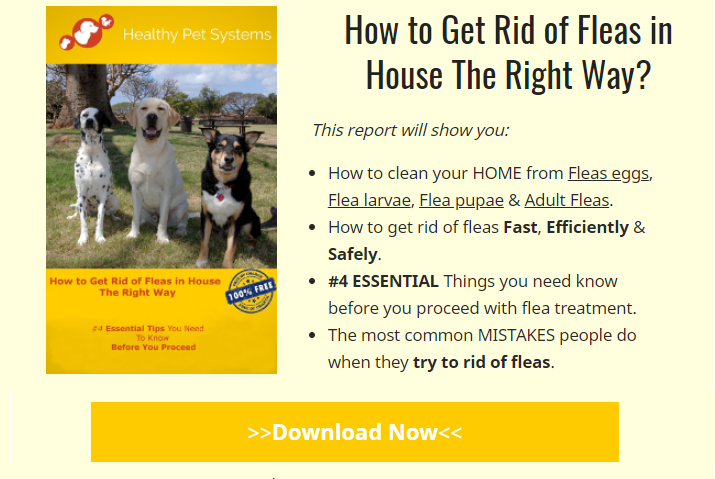 Do You Have Fleas In House? Wanna Learn How To Get Rid Of Fleas In House  Fast?