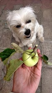 Home Made Foods for dogs
