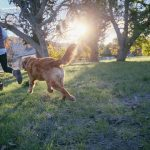 How To Choose a Dog For You Or Your Family
