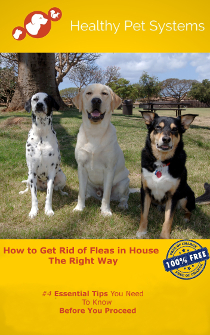 How to Get Rid of Fleas in House The Right Way-210x230