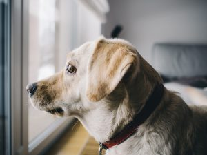 How to Solve Dog Barking Problems