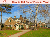 How to get Rid of fleas in yard
