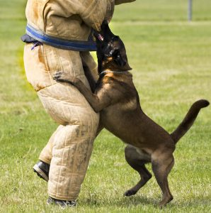 How to stop Dog Aggression towards People