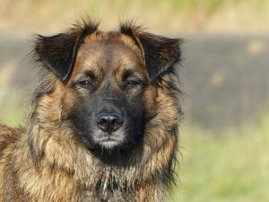 Kill Fleas on Dogs