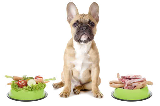 Raw Meat Dog Food Suppliers