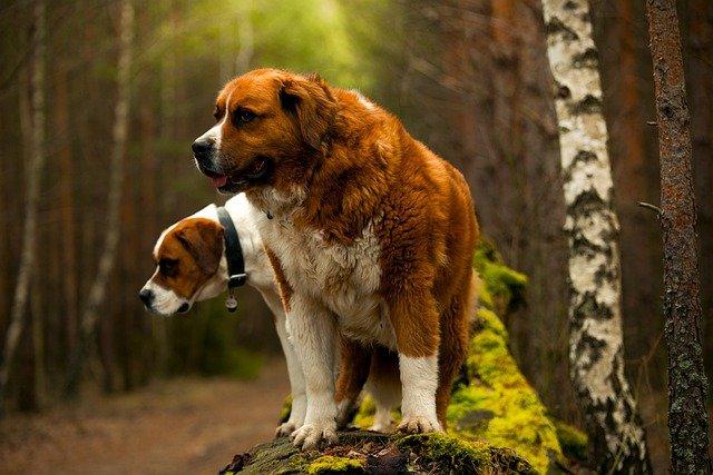 Runaway dogs