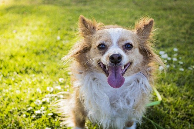 TOP 10 Luckiest Dog Names
