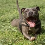 TOP 10 Strongest Dog Names For Male And Female