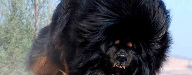 TOP 10 badass dog names