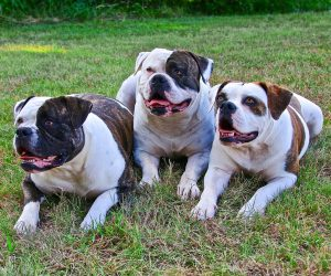 TOP 10 dog breeds most likely to run away