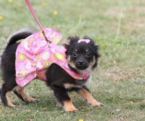 TOP 10 low-maintenance dog breeds