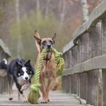 TOP 10 most playful dog breeds in the world