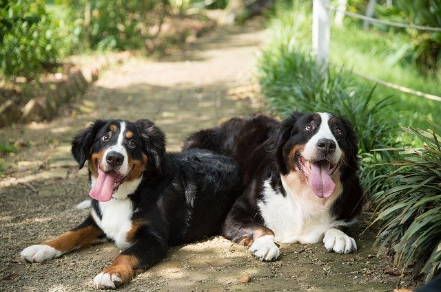 TOP 10 unique dog names for male and female