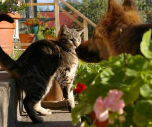 Top 10 dog breeds that hate cats