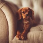 Top 10 dog breeds you can leave alone at home