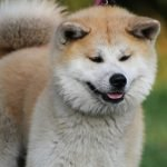 Top 10 japanese dog names for male and female
