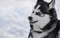 Top 10 vampire dog names for male and female