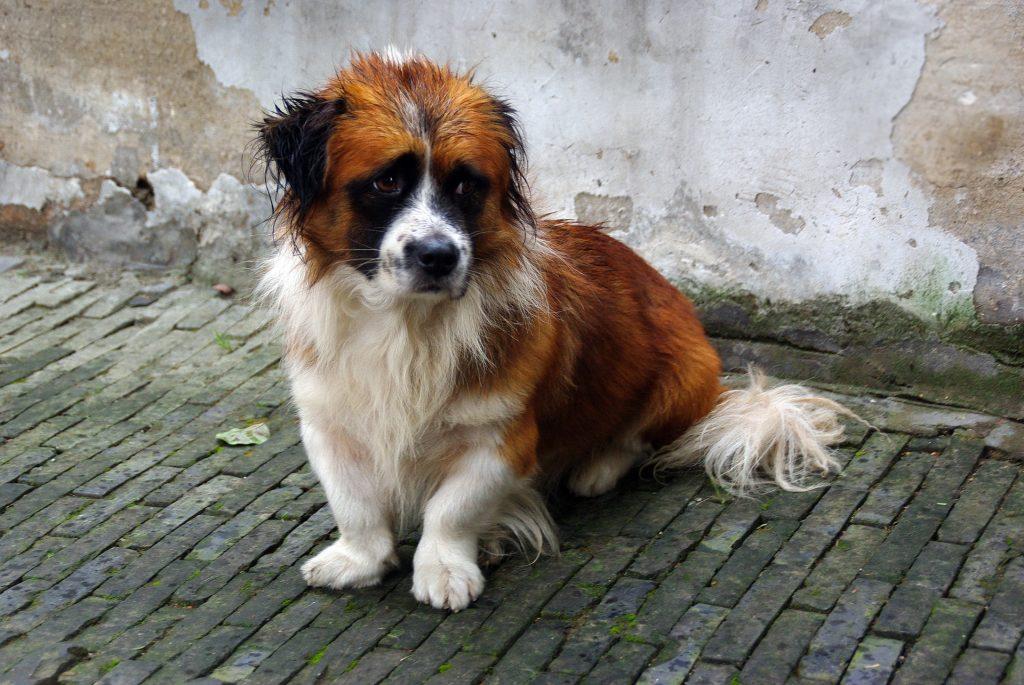 Top 6 saddest dogs on earth