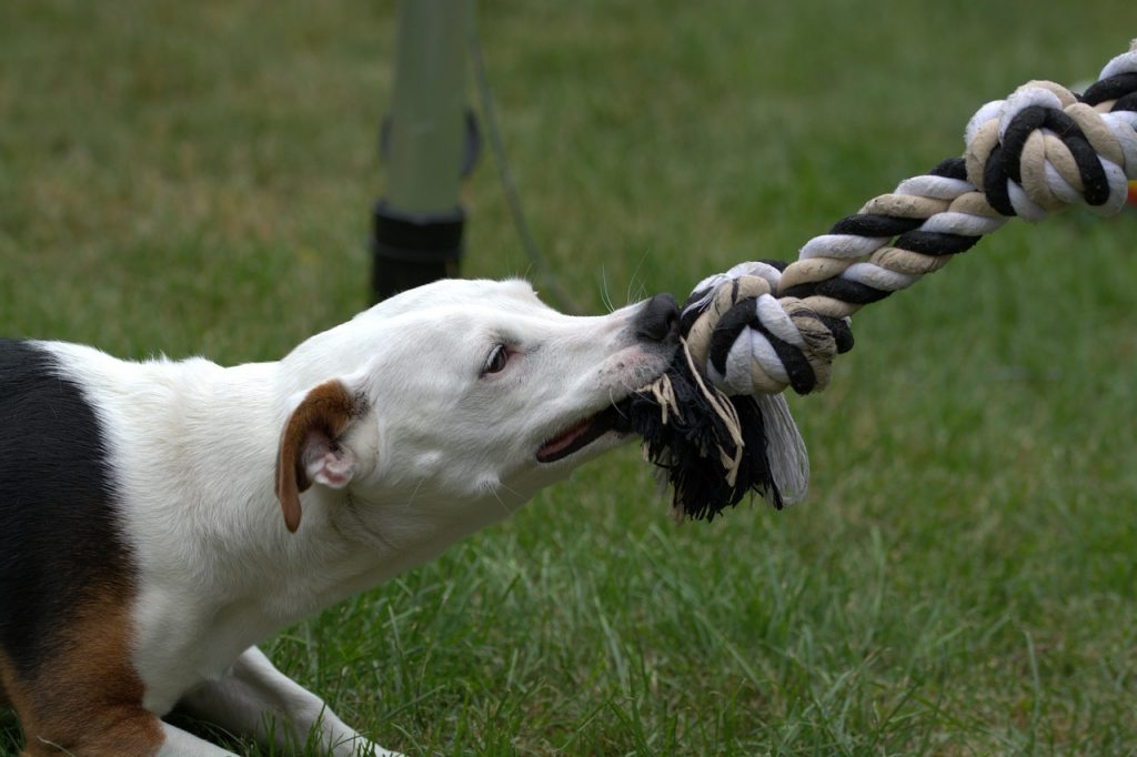 Tug-of-War game for pet