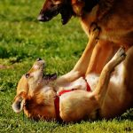 Types of Aggression in Dogs