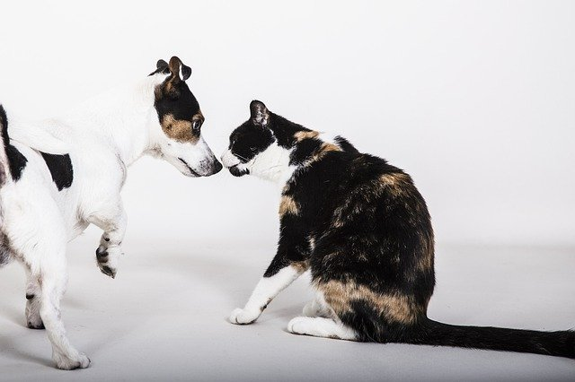 Worst dogs for cats